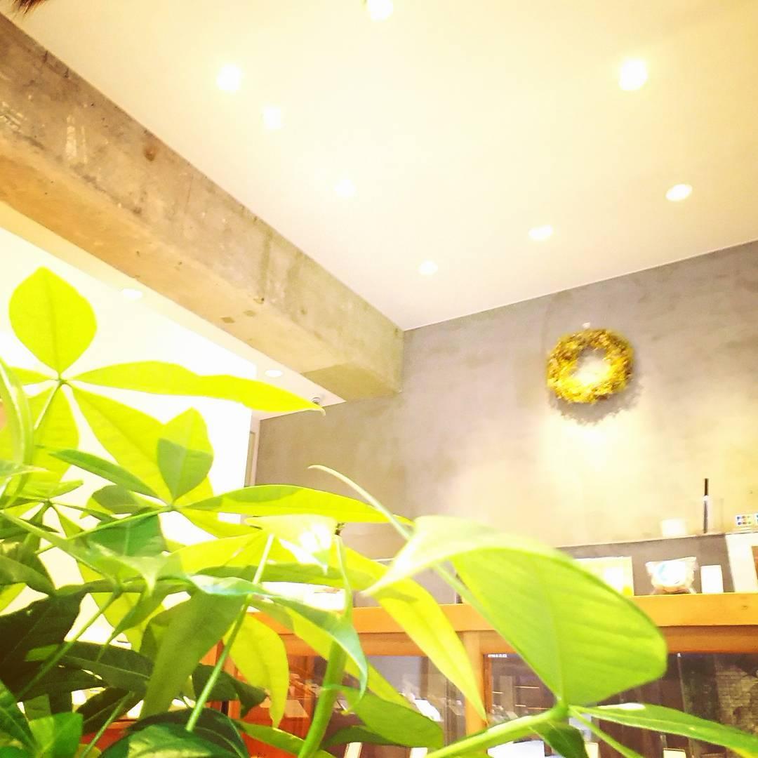 こんにちは❗ 毎日暑いですね😣💦💦夏バテしていませんか? お茶の菓さいさいのお店の植物達は太陽の日をたっぷり浴び…